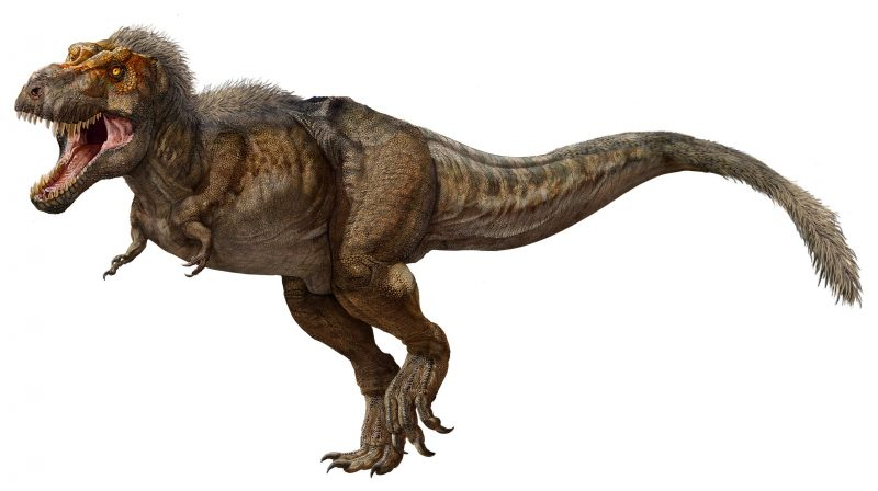 An updated artist's depiction of a fully-grown T. rex. More recent studies suggest the fearsome beasts had feathers on their heads, backs and tails. Image via Zhao Chuang/ PNSO/ Business Insider.