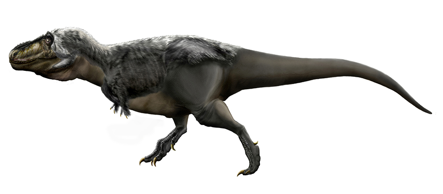 Illustration of Tyrannosaurus rex. Credit: Wikimedia Commons