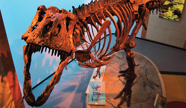 "The T. rex, nicknamed Scotty is on display at the Royal Saskatchewan Museum in Regina. Photo courtesy of ""The Saskatchewanderer"", Royal Saskatechewan Museum in Regina."