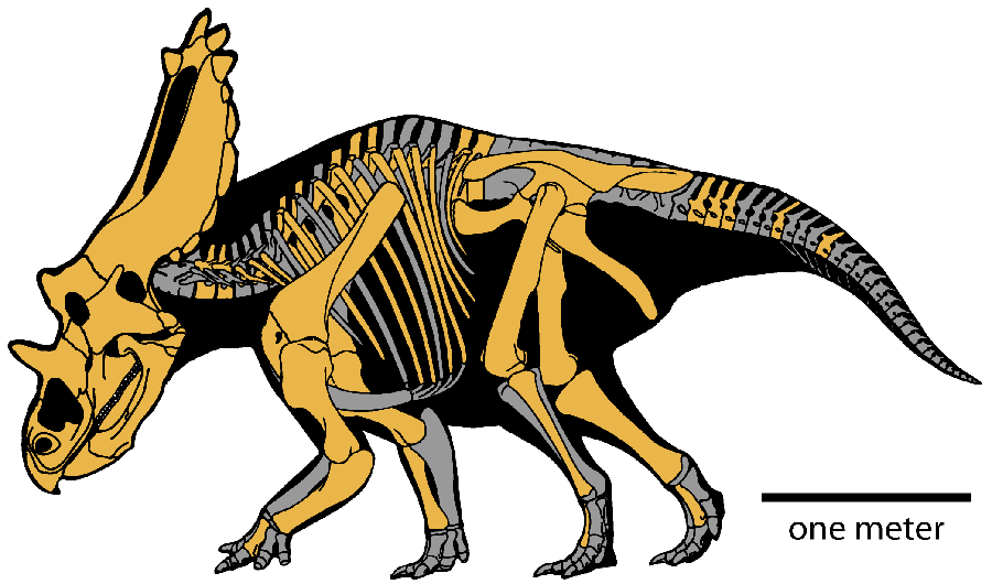 Reconstructed skeleton of Utahceratops with known elements in yellow