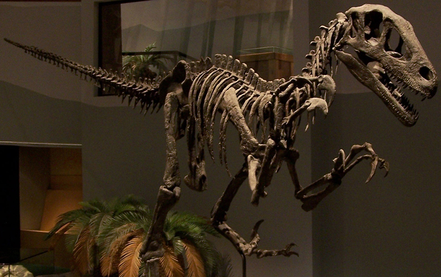 The Senate approved a proposition to christen Utahraptor as the Utah State Dinosaur. but it was decided to be a recognized insignia of the state instead. Photo: Zach Tirrell / CC BY-SA 2.0