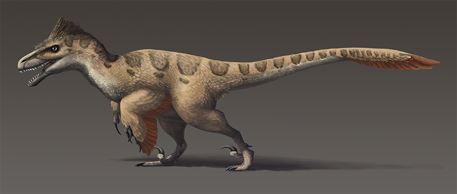 Life restoration by Emily Willoughby, 2014