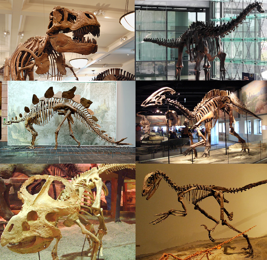 A collection of skeletons mounted in museums of various dinosaurs