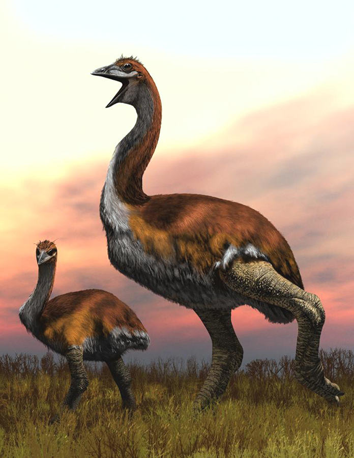 An artist's illustration of a giant elephant bird. Image credit: Jaime Chirinos.