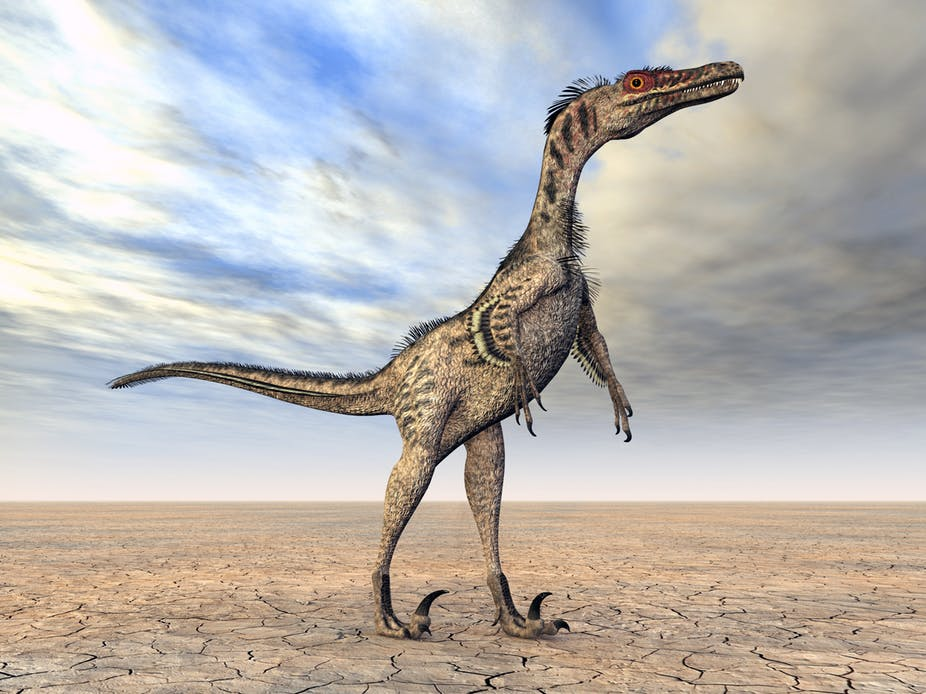Was velociraptor a feathered friend? Here's one artist's impression. Shutterstock
