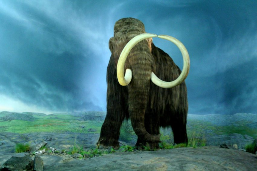 Male Woolly Mammoths More Often Fell into Natural Traps