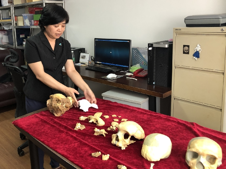 Wu Xiujie, professor with the Institute of Vertebrate Paleontology and Paleoanthropology of the Chinese Academy of Sciences, displays the fossils discovered at an excavation site in Dongzhi County in east China's Anhui Province. (Xinhua/Ma Shurui)