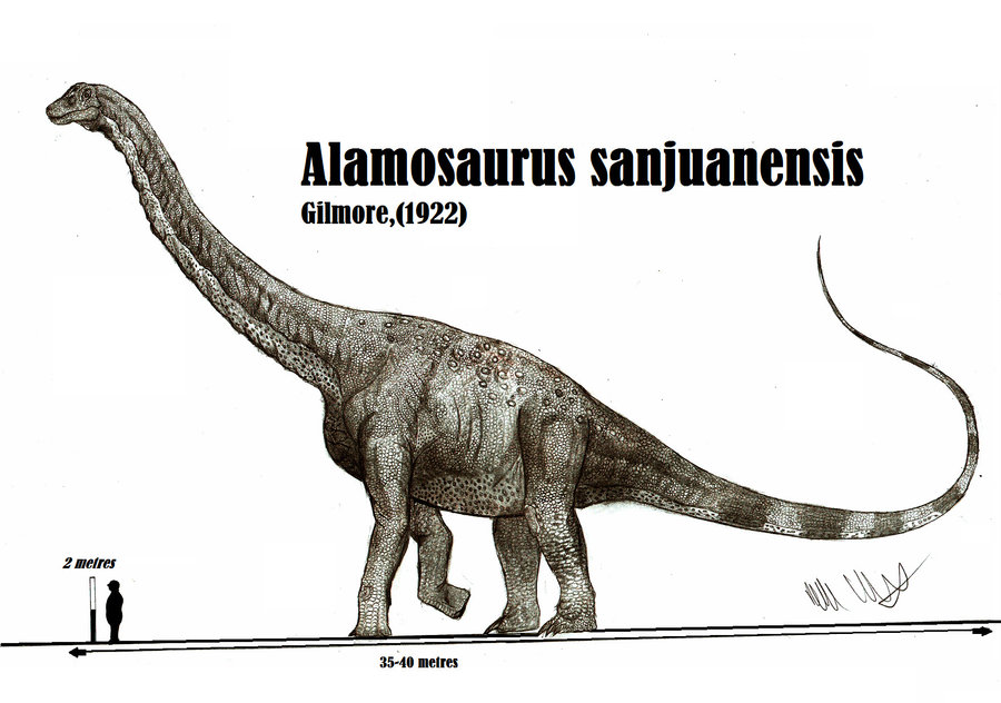 The size of Alamosaurus sanjuanensis by teratophoneus on DeviantArt