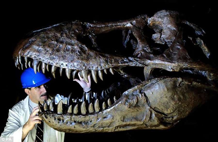A T-rex at the Natural History Museum: A new study claims that the biology of dinosaurs was skewed towards big species, with many more mammoth examples than among today's animals