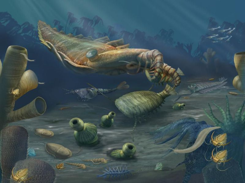 The Cambrian Period was a time of remarkable diversification of life when many of the animal groups that exist today first appear in the fossil record. (Ocean Portal / Smithsonian Institution)
