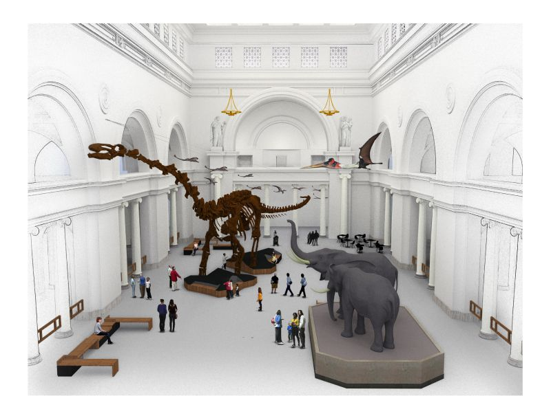 Maximo, a 122-foot-long titanosaur skeleton cast, is being installed in the Field Museum, in the spot once occupied by SUE the T-Rex. (Credit: Field Museum)