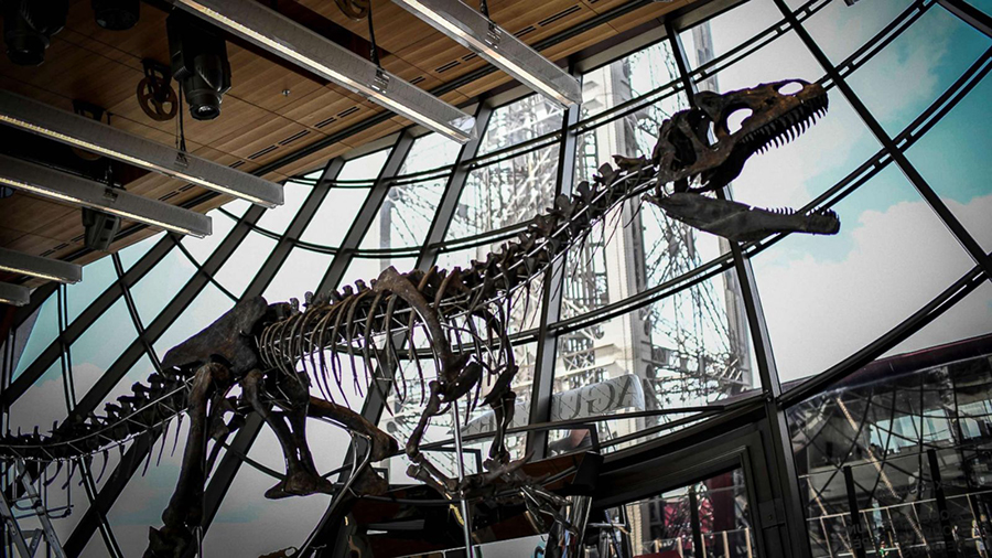 A skeleton of an unknown carnivorous dinosaur discovered in Wyoming in 2013 is on display at the first floor of the Eiffel Tower in Paris on June 2, 2018. (Stephane de Sakutin /AFP/Getty Images)