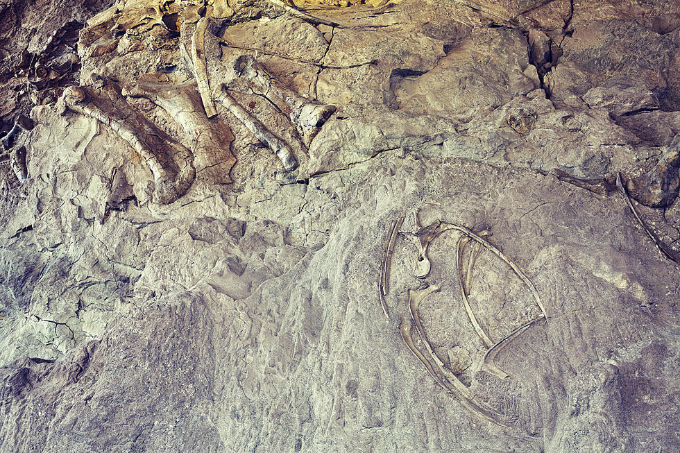 ThinkStock/Dinosaur National Monuement