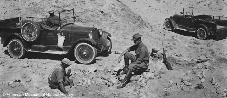 American explorer Roy Chapman Andrews' expedition in the Gobi in the late 1920s. Picture: Alamy