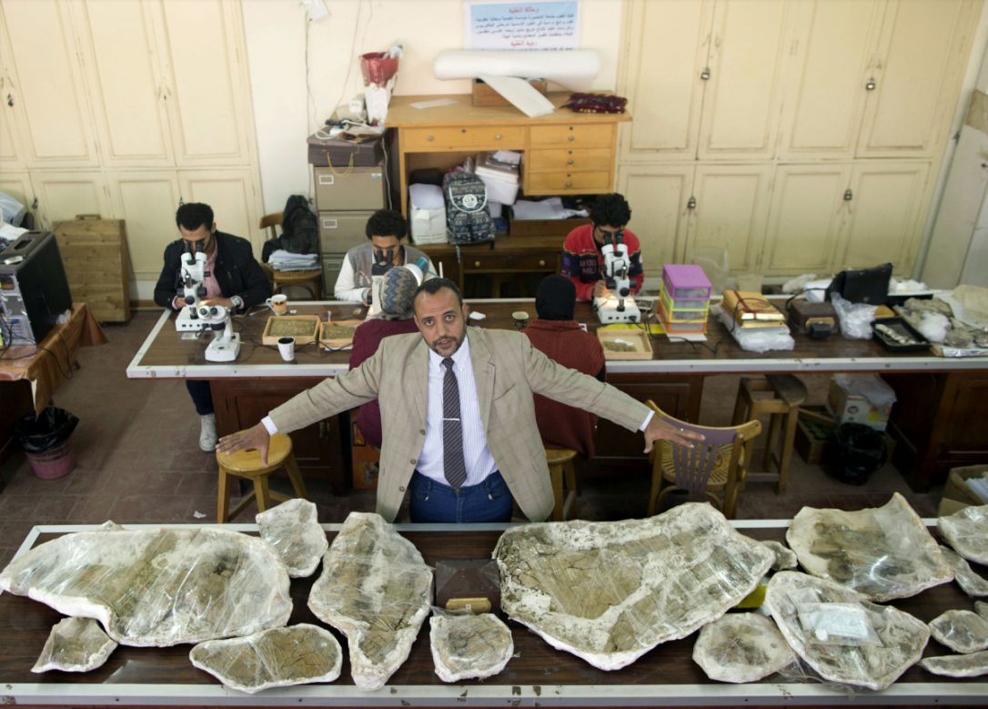 Hesham Sallam, head of Mansoura university's Center for Vertebrate Paleontology, displays bones of a Cretaceous period dinosaur in Mansoura, Egypt. The new species of long-necked herbivore is around the size of a city bus and could be just the tip of the iceberg of other finds.  (AMR NABIL / THE ASSOCIATED PRESS)
