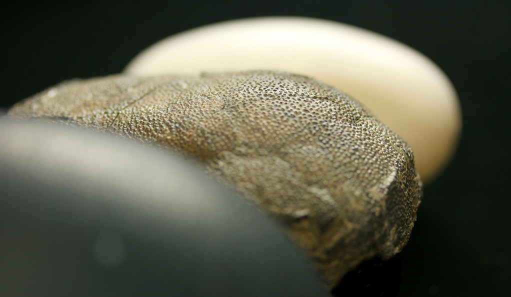 From front to back: an emu egg, a eumaniraptoran theropod egg, and a crocodile egg (Photo credit: Jasmina Wiemann)