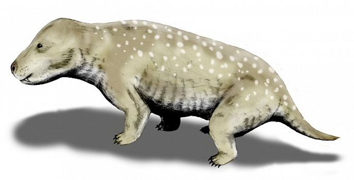 Exaeretodon frenguellii is a traversodontid cynodont from the Late Triassic of Argentina, pencil drawing, digital coloring. Image credit: Nobu Tamura/Wikimedia.org