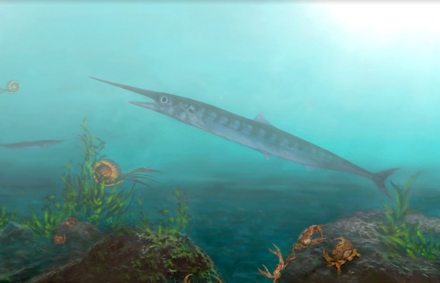 The long-jawed 'lizard fish' would have thrived in the oceans that once covered Colombia. (Oksana Vernygora)