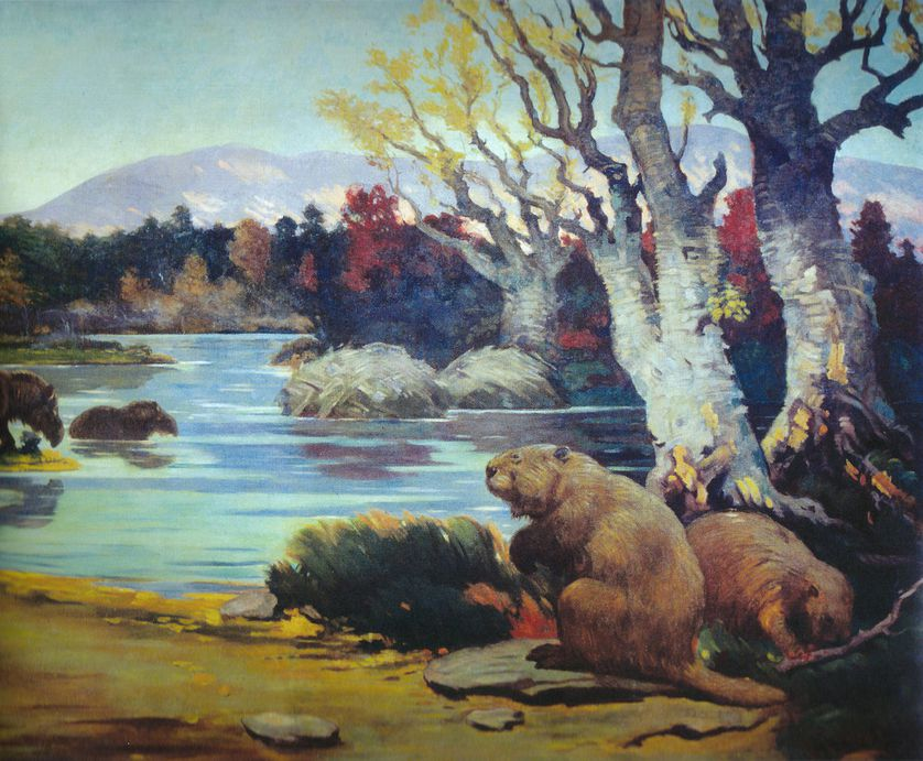 Giant beavers were plus-sized versions of the furry little creatures we know today. (Photo: Charles R. Knight/Wikimedia Commons)