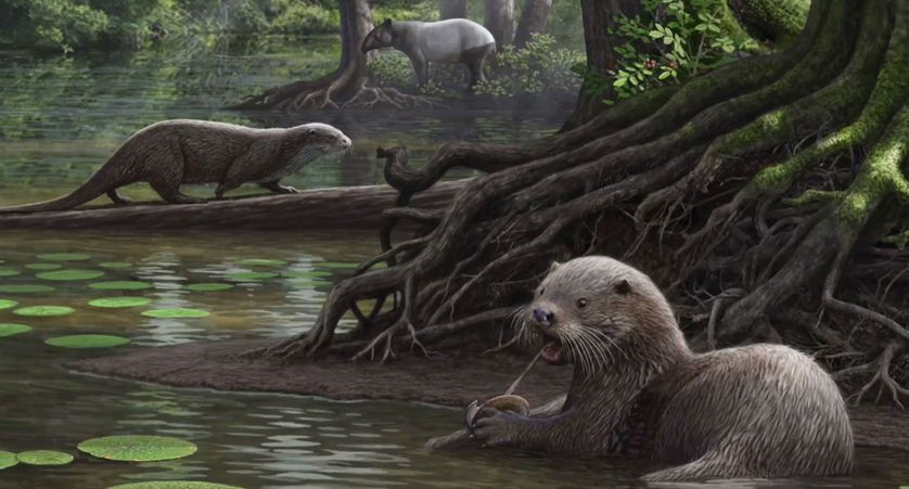 Giant otters the size of wolves lived six million years ago. (Photo: The Cleveland Museum of Natural History/YouTube)