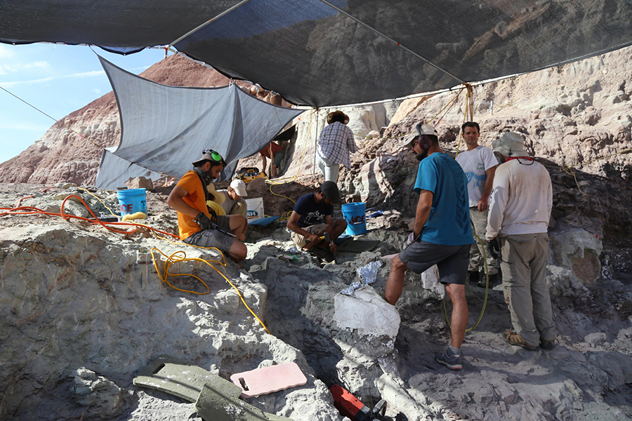 Researchers from South America work to extract a chunk of rock containing seven dinosaur vertebrae from the quarry — a significant specimen, but still under half the total vertebrae that would make up the full dinosaur. KATE GROETZINGER / KUER