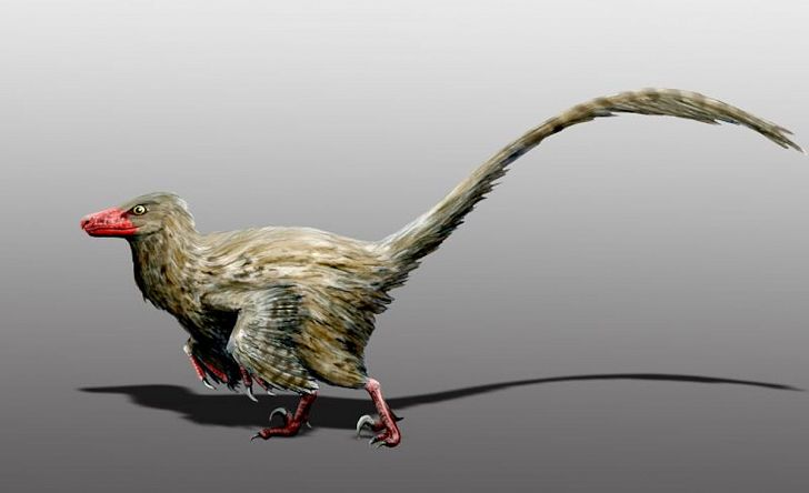 Hesperonychus was a dinosaur that was the size of a cat. Image credit: Wikipedia.org
