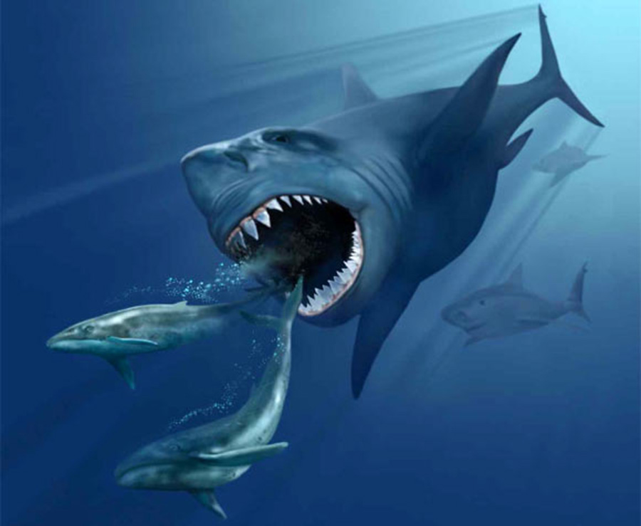 Carcharocles megalodon pursuing two prehistoric whales. Image credit: Karen Carr / CC BY 3.0.