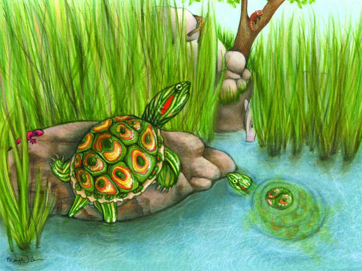 Trachemys haugrudi represents a new species of fossil turtle that lived in what is now eastern Tennessee more than 5.5 million years ago. Image credit: Mary P. Williams.