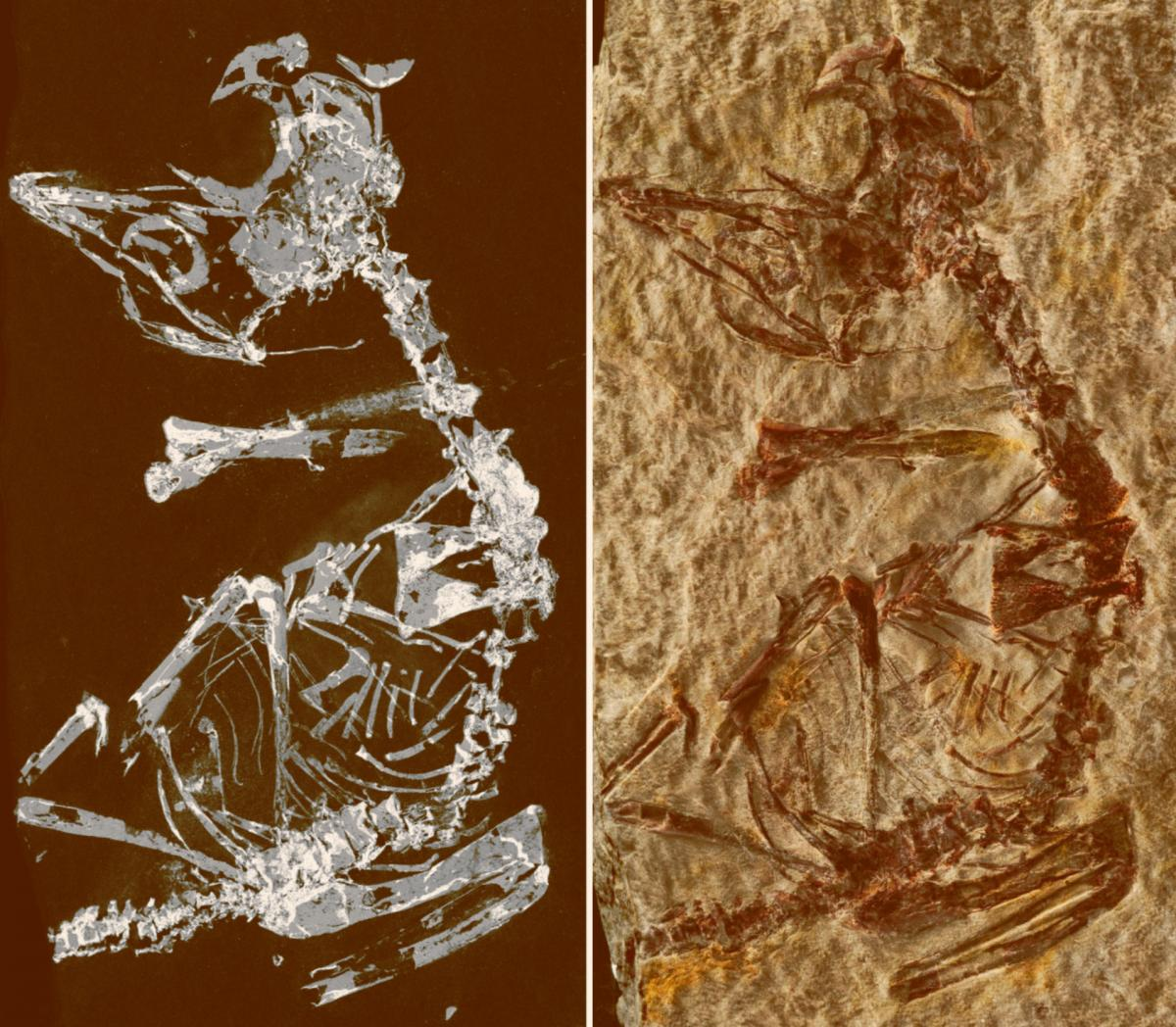 Phosphorous mapping image and photo of the specimen. Image credit: Fabien Knoll.