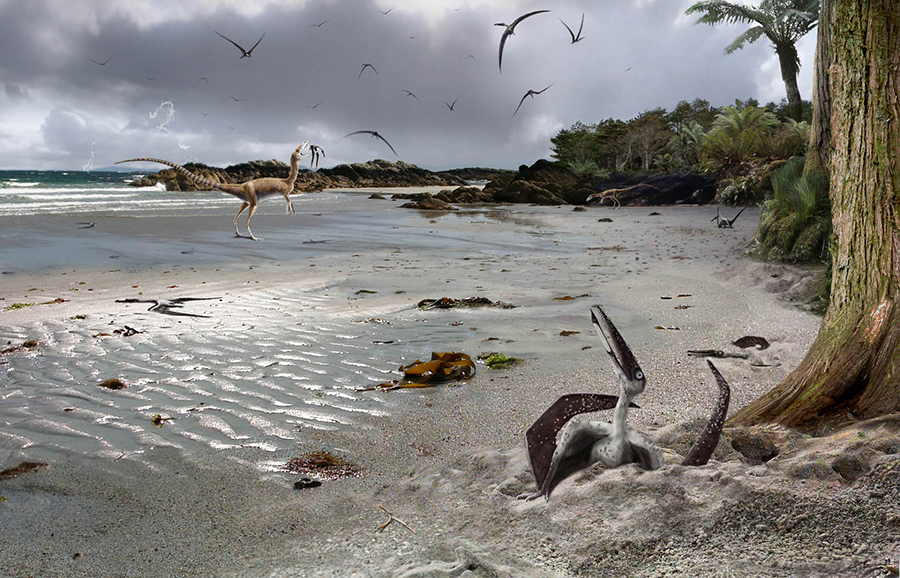 On a summer day in the Early Cretaceous 124 million years ago, a hatchling (flapling) pterosaur emerges from the sand and gazes at the sky for the first time. Other hatchlings lie exhausted from their struggles or crawl to safety on trees fringing the beach. The less lucky are caught and eaten by small theropods (Sinosauropteryx). From the safety of the trees flaplings make their maiden flights. Inexperience means that many are killed in accidents or storms, their bodies drifting out into nearby lakes where a tiny few are preserved as fossils in fine muddy sediments that now form rocks that crop out in Liaoning Province China. Image credit: James Brown.