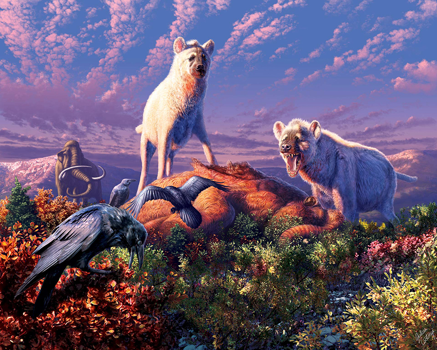 An artist's rendering of ancient Arctic hyenas belonging to the genus Chasmaporthetes. Image credit: Julius T. Csotonyi.