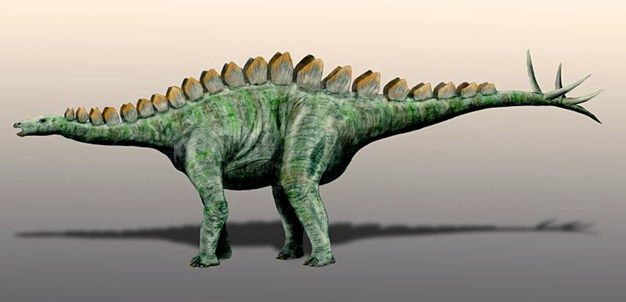 Adratiklit boulahfa is closely related to the European stegosaurs Dacentrurus and Miragaia (seen here). Image credit: Nobu Tamura, spinops.blogspot.com / CC BY 3.0.