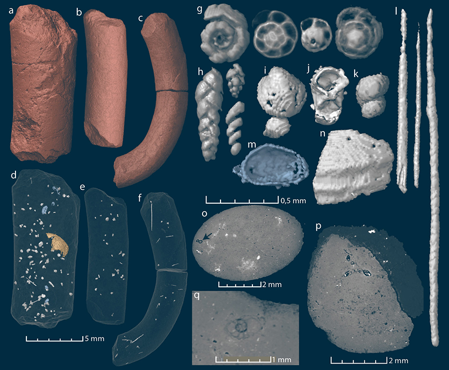 Virtual reconstructions and virtual thin sections of coprolites (a-f) and inclusions (g-q). Image credit: Qvarnström et al, doi: 10.7717/peerj.7375.