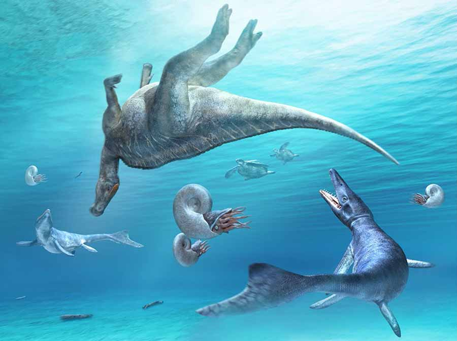 Carcass of Kamuysaurus japonicus, floating in the sea, with two mosasaurs (Mosasaurus hobetsuensis), two sea turtles (Mesodermochelys undulates), and four ammonoids (Pachydiscus japonicus). Image credit: Kobayashi et al, doi: 10.1038/s41598-019-48607-1.