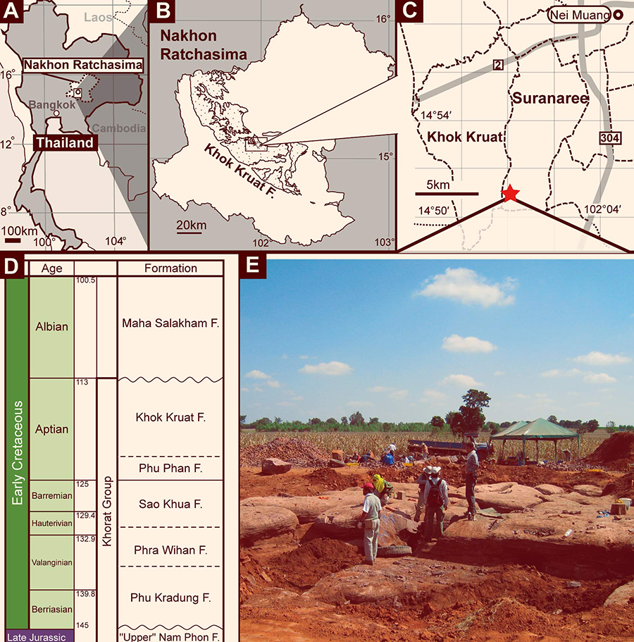 Locality map of new theropod material and stratigraphy of Khorat Group: A – map of Nakhon Ratchasima Province, Thailand; B – distribution map of the Khok Kruat Formation in Nakhon Ratchasima Province; C – enlarged locality map of Suranaree and Khok Kruat subdistricts with the subdistrict boundaries; D – a photograph of the excavation site; E – stratigraphic column of the Khorat Group. A red-colored star indicates the new theropod locality, the dotted lines indicate the subdistrict boundaries, and the gray-colored lines indicate the roads in C, respectively. Image credit: Chokchaloemwong et al, doi: 10.1371/journal.pone.0222489.