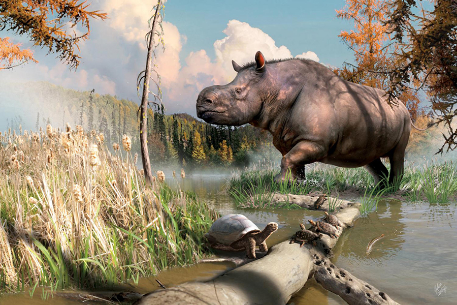 An artist's imagining of an ancient rhinoceros splashing through a stream next to turtles and fish in the Yukon. Image credit: Julius Csotonyi.