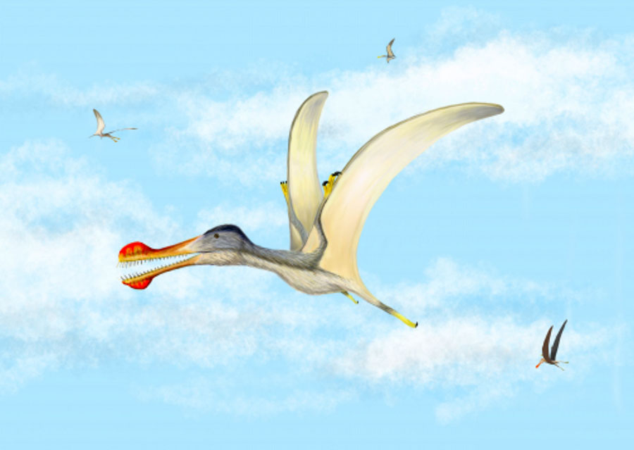 Anhanguera soaring the skies over the Kem Kem with Coloborhynchus and Ornithocheirus. Image credit: Megan Jacobs.