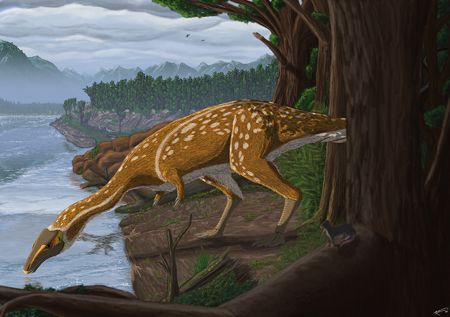 Life reconstruction of the first Australian elaphrosaur. Image credit: Ruairidh Duncan.