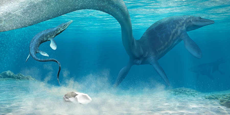 An artist's rendering of a pair of mosasaurs and their egg. Image credit: Francisco Hueichaleo.