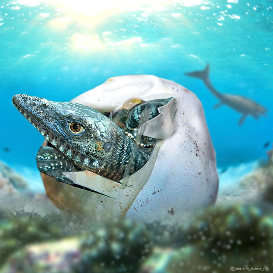 An artist's interpretation of a baby mosasaur emerging from an egg. Image credit: Francisco Hueichaleo.