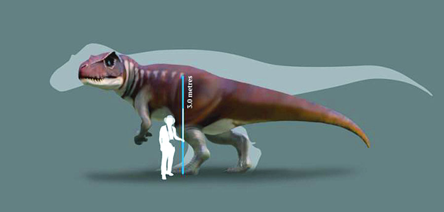A reconstruction of a Jurassic dinosaur track-maker from southern Queensland in front of a silhouette of the largest known Tyrannosaurus rex. Image credit: Anthony Romilio.