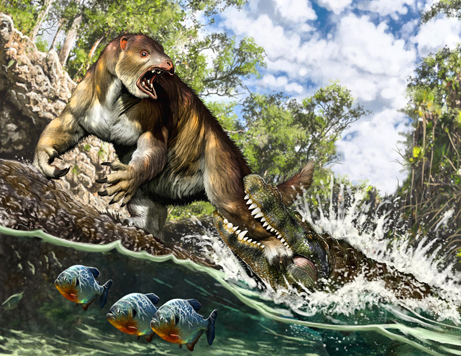 Life reconstruction of the putative attack of a young to sub-adult Purussaurus on the ground sloth Pseudoprepotherium in a swamp of proto-Amazonia. Image credit: Jorge A. González.