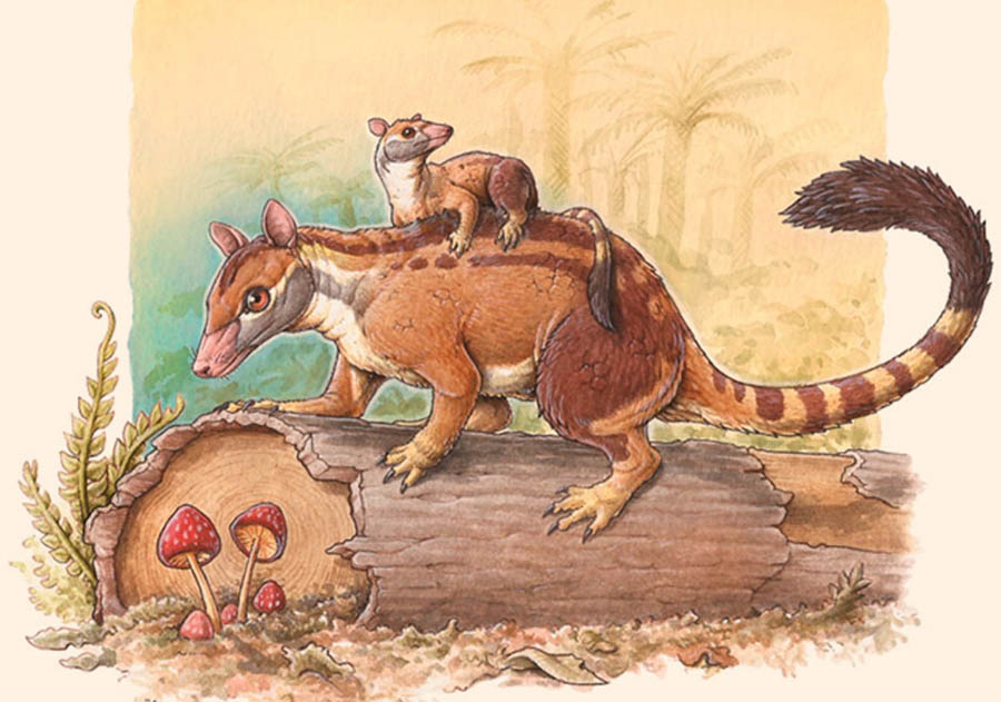 Kramadolops maximus, the youngest known species of polydolopid marsupial. Image credit: Gabriel Lío.