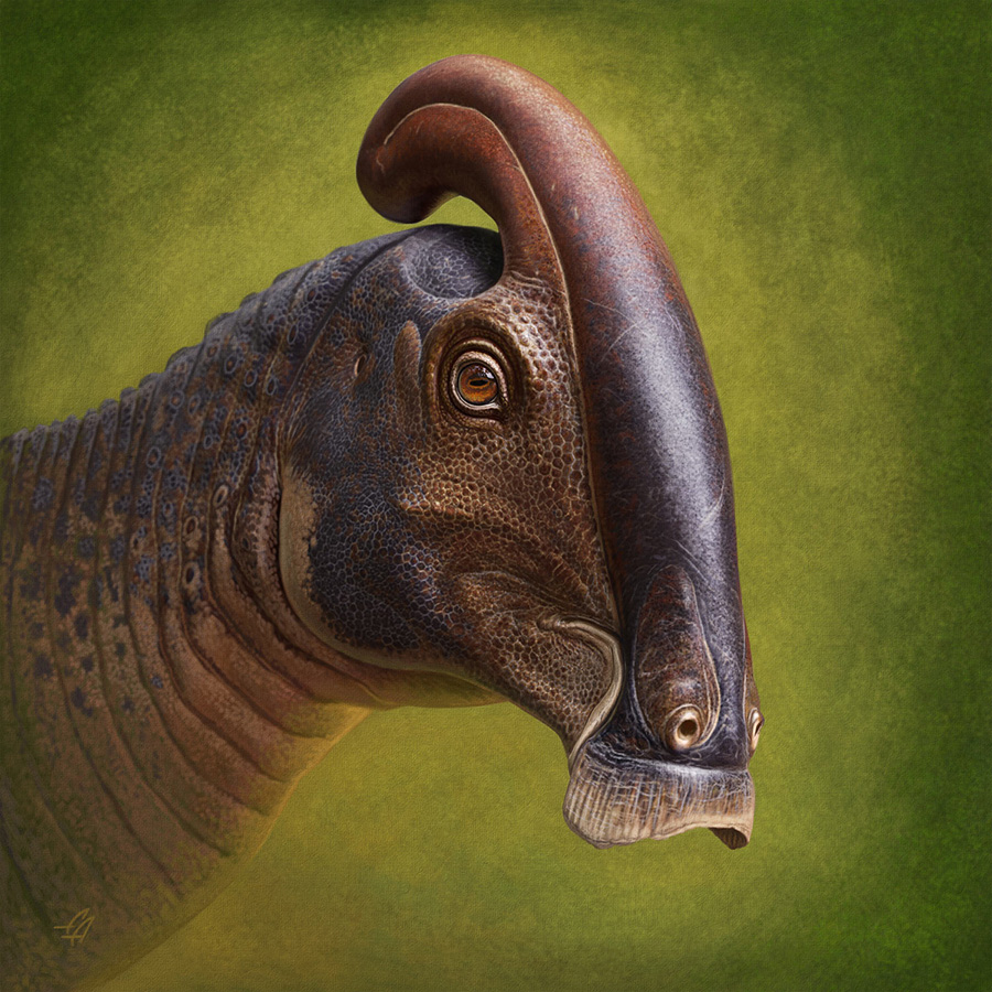 Life reconstruction of the head of Parasaurolophus cyrtocristatus. Image credit: Andrey Atuchin.