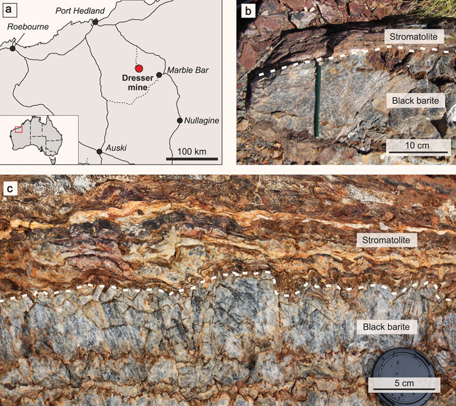 Location of the Dresser mine in Western Australia (a) and black barite associated with originally sulfidic stromatolites at the sampling site (b) and in the working area (c). The close association between the inclusion-bearing black barites and stromatolites suggests that hydrothermal fluids might have influenced ancient microbial communities. Image credit: Mißbach et al., doi: 10.1038/s41467-021-21323-z.