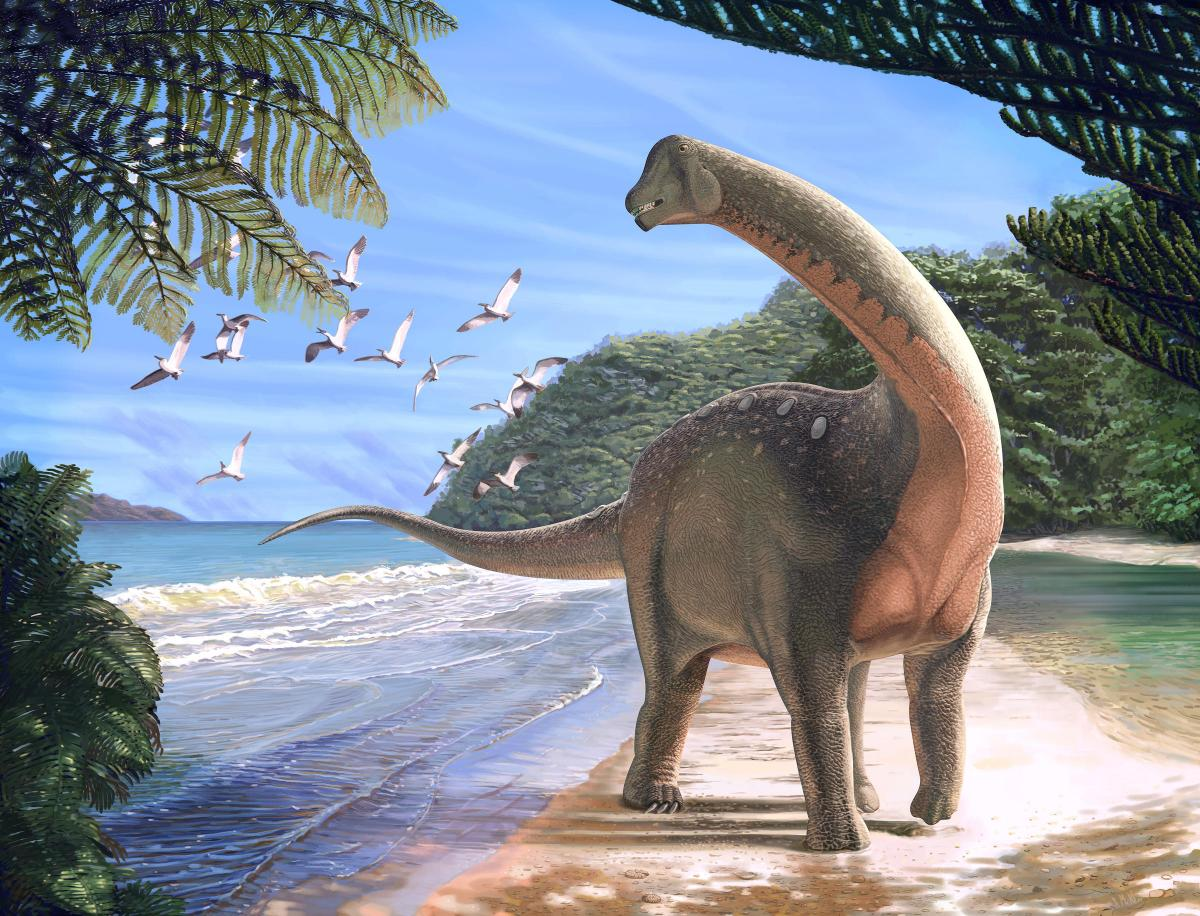 An artist's rendering of the Mansourasaurus shahinae, an African elephant-sized sauropod that lived about 80 million years ago. ANDREW MCAFEE / CARNEGIE MUSEUM OF NATURAL HISTORY
