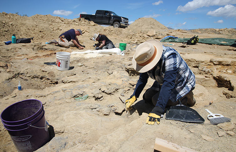 Mark Graham, a fossil preparator at the Museum, works to excavate fossils from the Morrison Formation