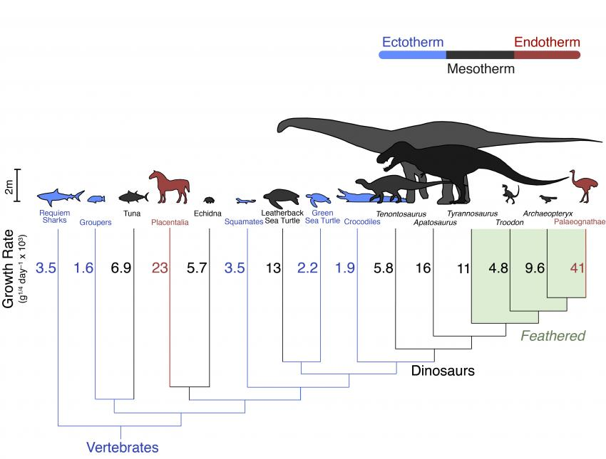 Were Dinosaurs Warm-Blooded or Cold-Blooded?