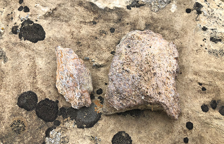 Palaeontologists don't always have to dig to find evidence of dinosaurs. Rocks can naturally weather away to reveal bones that have been hidden for millions of years.