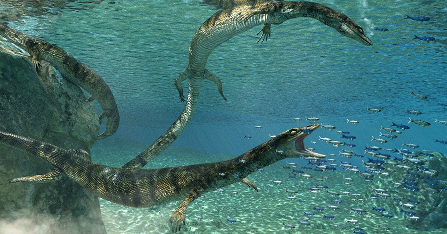 The newly discovered marine lizard, named Primitivus manduriensis, hunted in the shallow waters of what is now Puglia, Italy, 70 to 75 million years ago. (Illustration: Fabio Manucci)